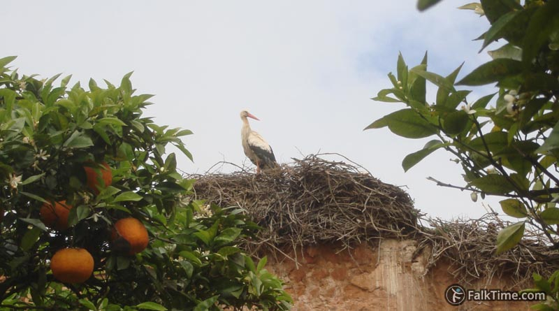 Stork and orange tree