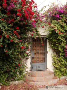Bougainvillea flowers over the door