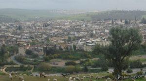 Old Medina & sheep