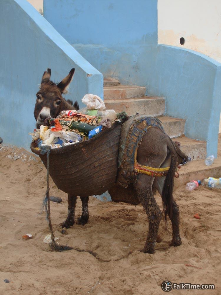 A donkey eating garbage