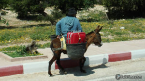 A donkey carrying a suitcase