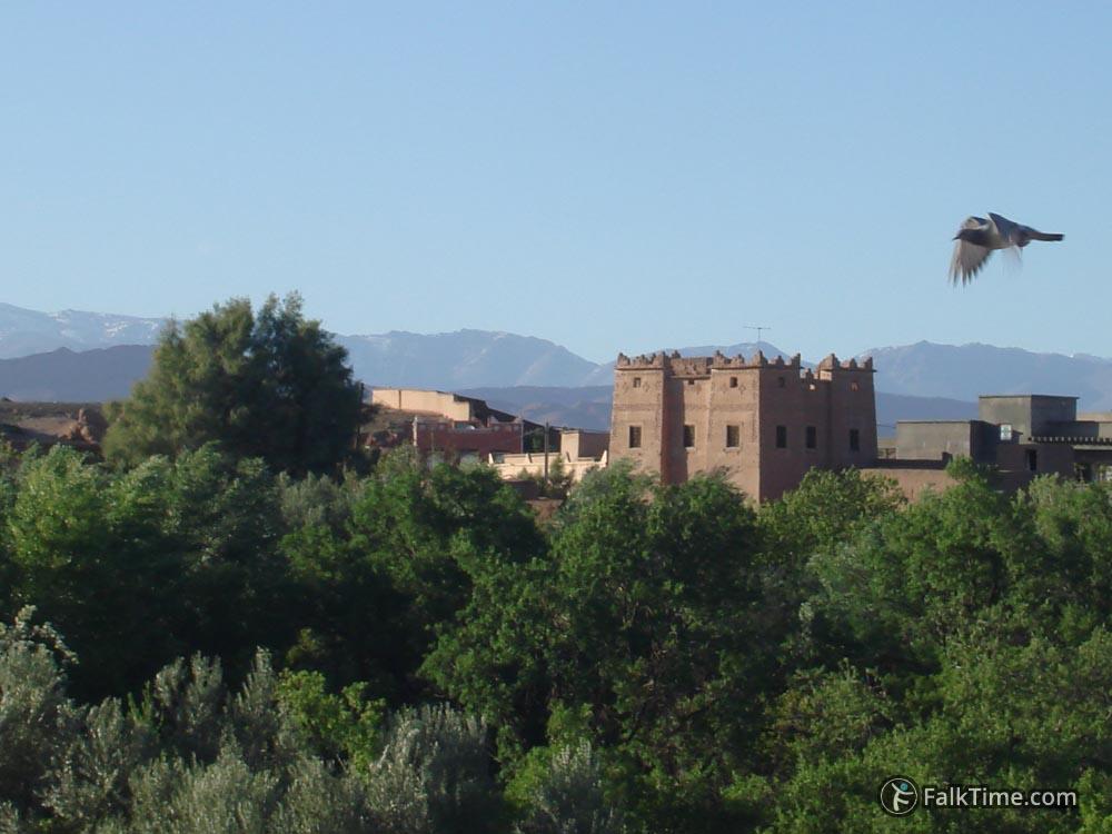 Kasbah in Kelaat M'Gouna valley