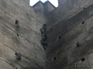 Swifts on fortified wall