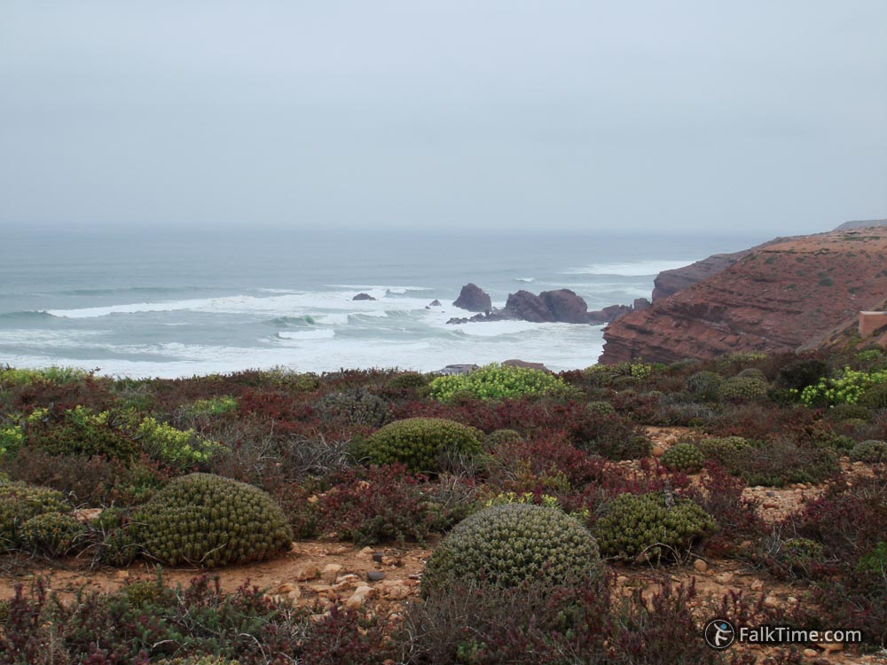Cactuses and view to the ocean
