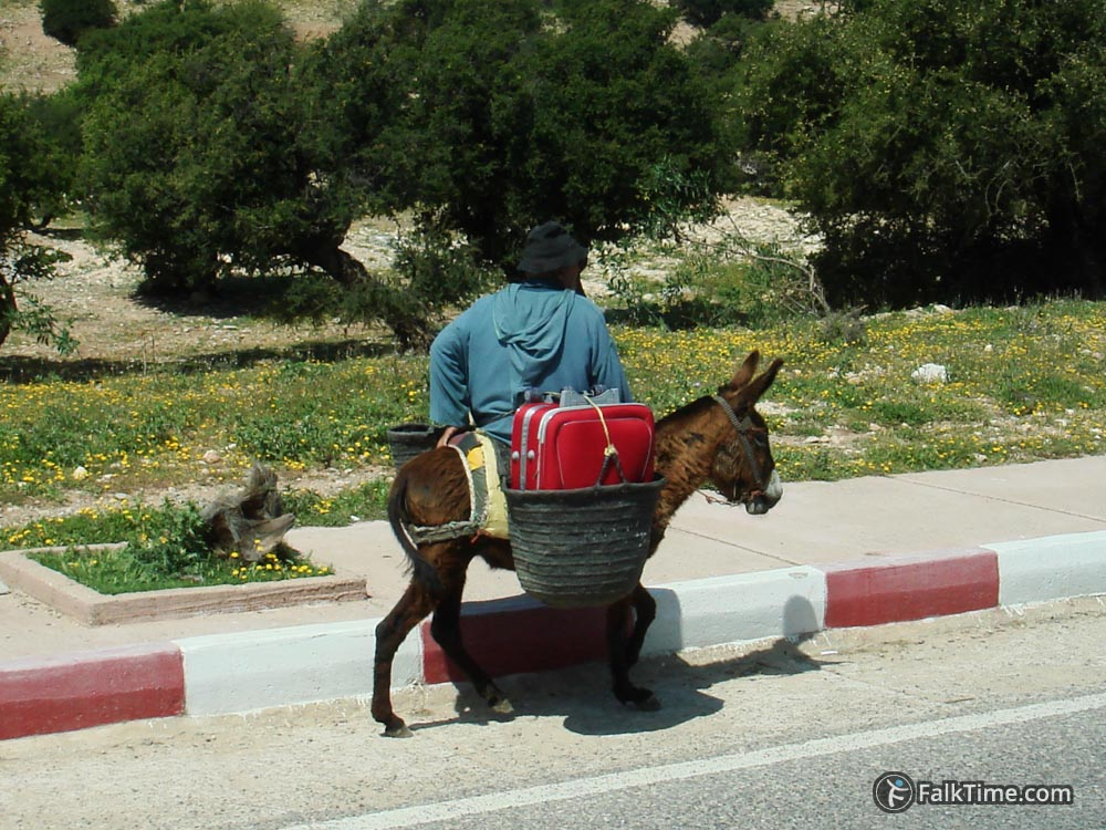 A donkey carrying a man and a suitcase