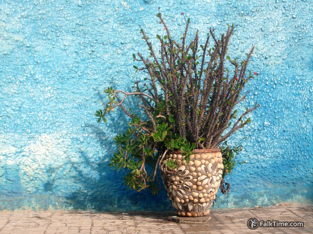 Picturesque plant in shell-decorated pot