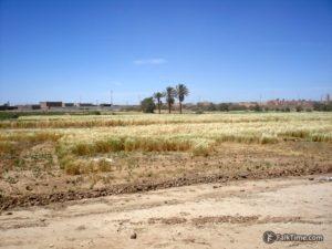 Agriculture in desert