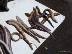 Moray eels for sale