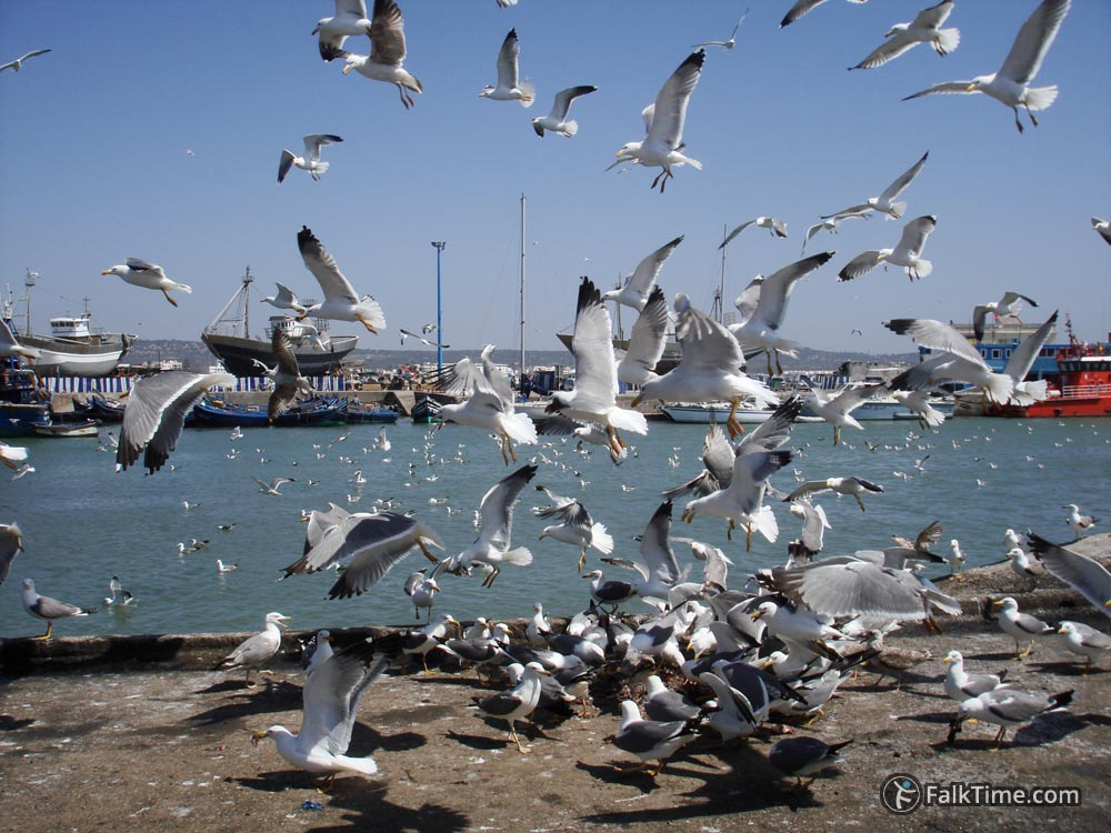 A lot of seagulls