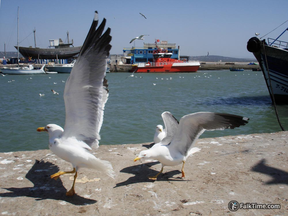 Fighting seagulls