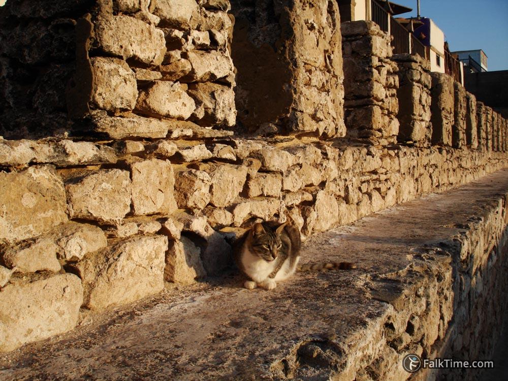 Cat enjoying sun on the wall