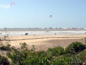Kitesurfing and horseriding - beach of Essaouira