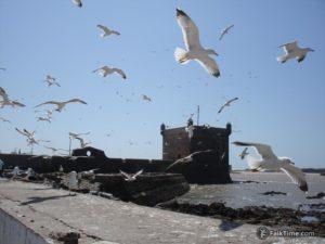 Seagulls and sqala du port