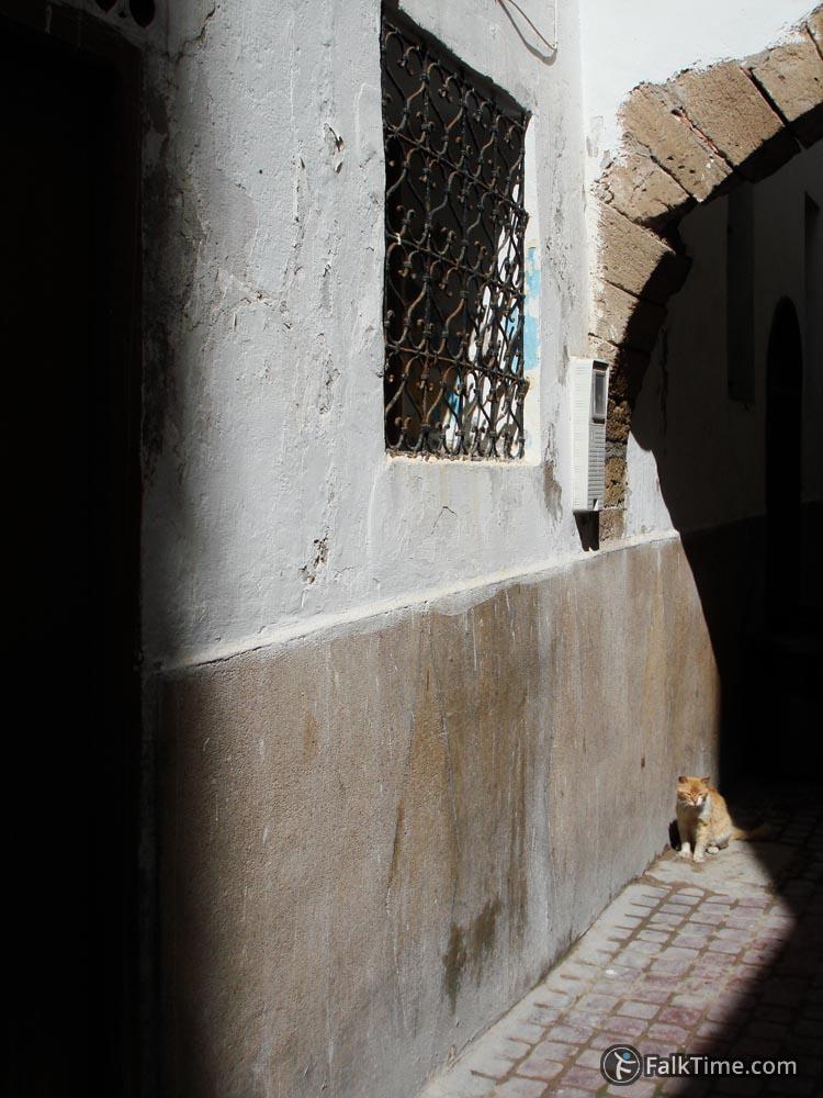 A cat enjoying sun
