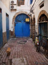 Dead end, door and cat