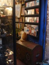 Bookshop & cat